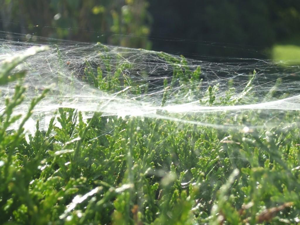 Toile d'araignée-Bussang